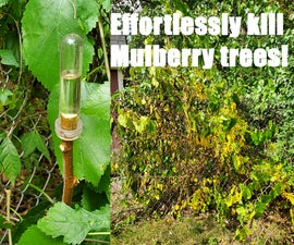 Effortlessly Kill Mulberry Trees Without a Saw!