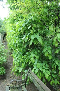 Edible Hedges - Getting the Most Out of Your Plot With Tree Fodder and Tree Hay