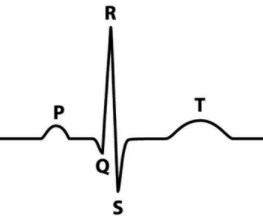 Recording Bioelectric Signals: ECG and Heart Rate Monitor