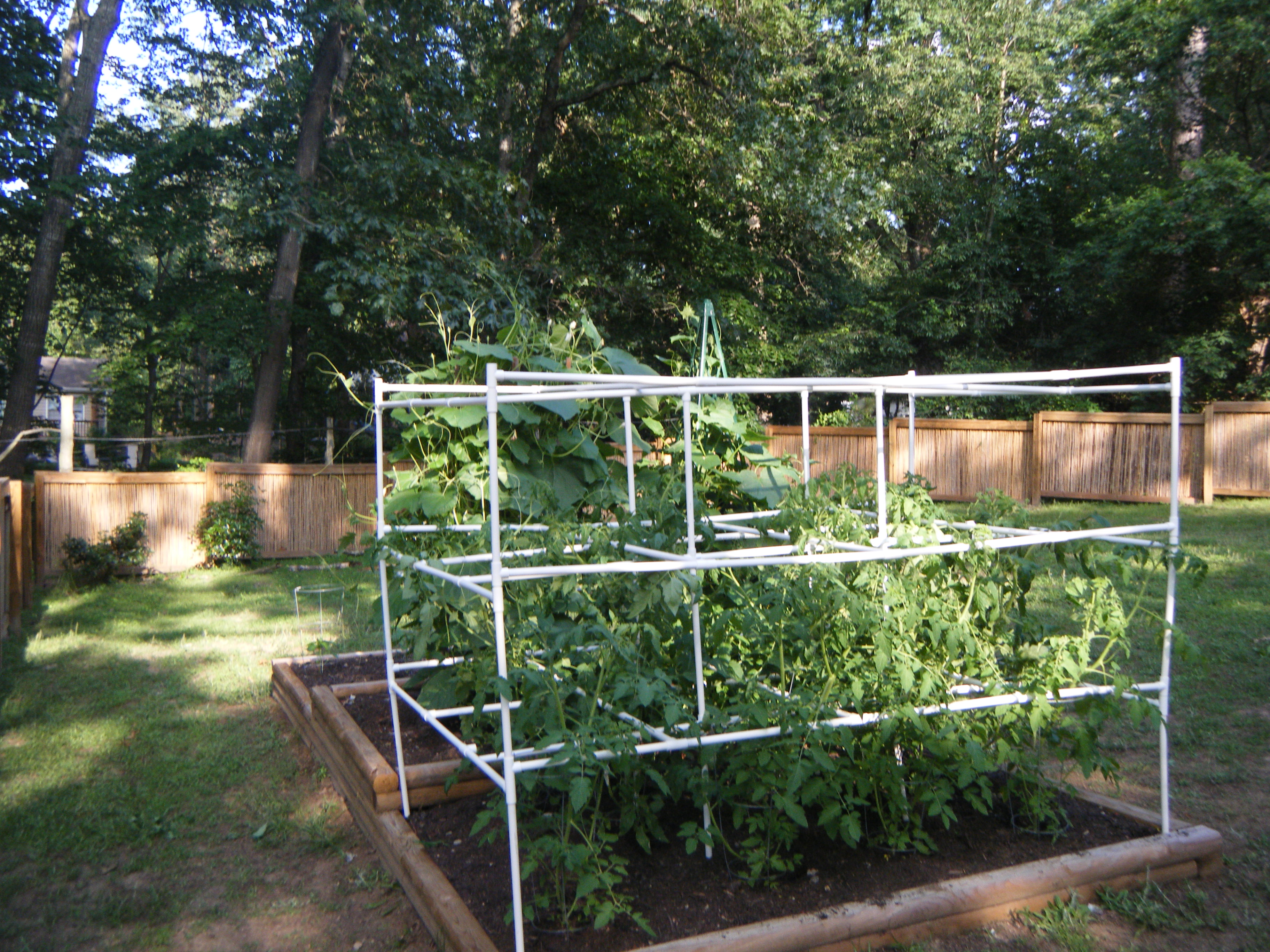 Picture of Tomato Cage With PVC