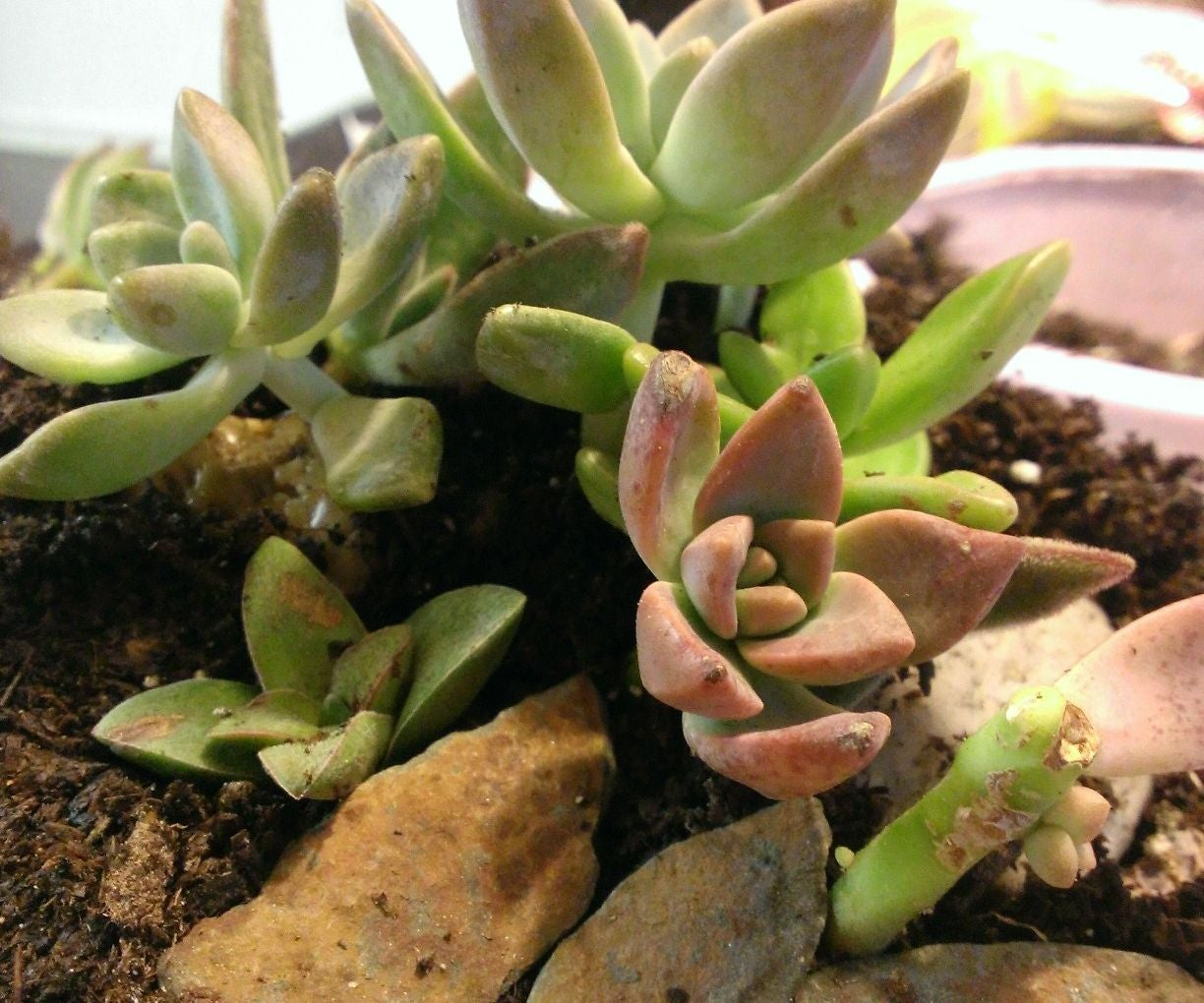 Let S Learn About Terrariums A Guide To Terrariums 5 Steps With