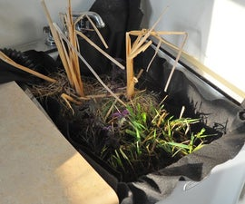 Filter your Laundry Graywater with Marsh Plants!