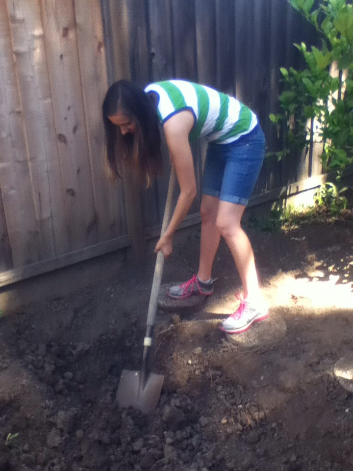 Picture of Getting Rid of the Bad Dirt