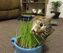 Grow Your Own Cat Grass