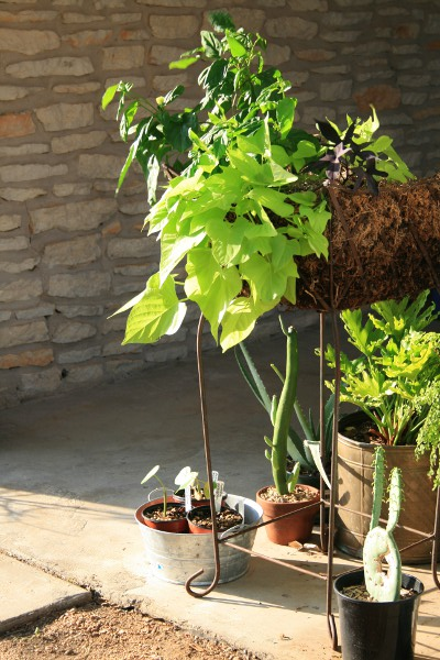 Picture of Confessions of a Serial Plant Collector