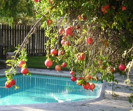 How To Make Pomegranate Jelly