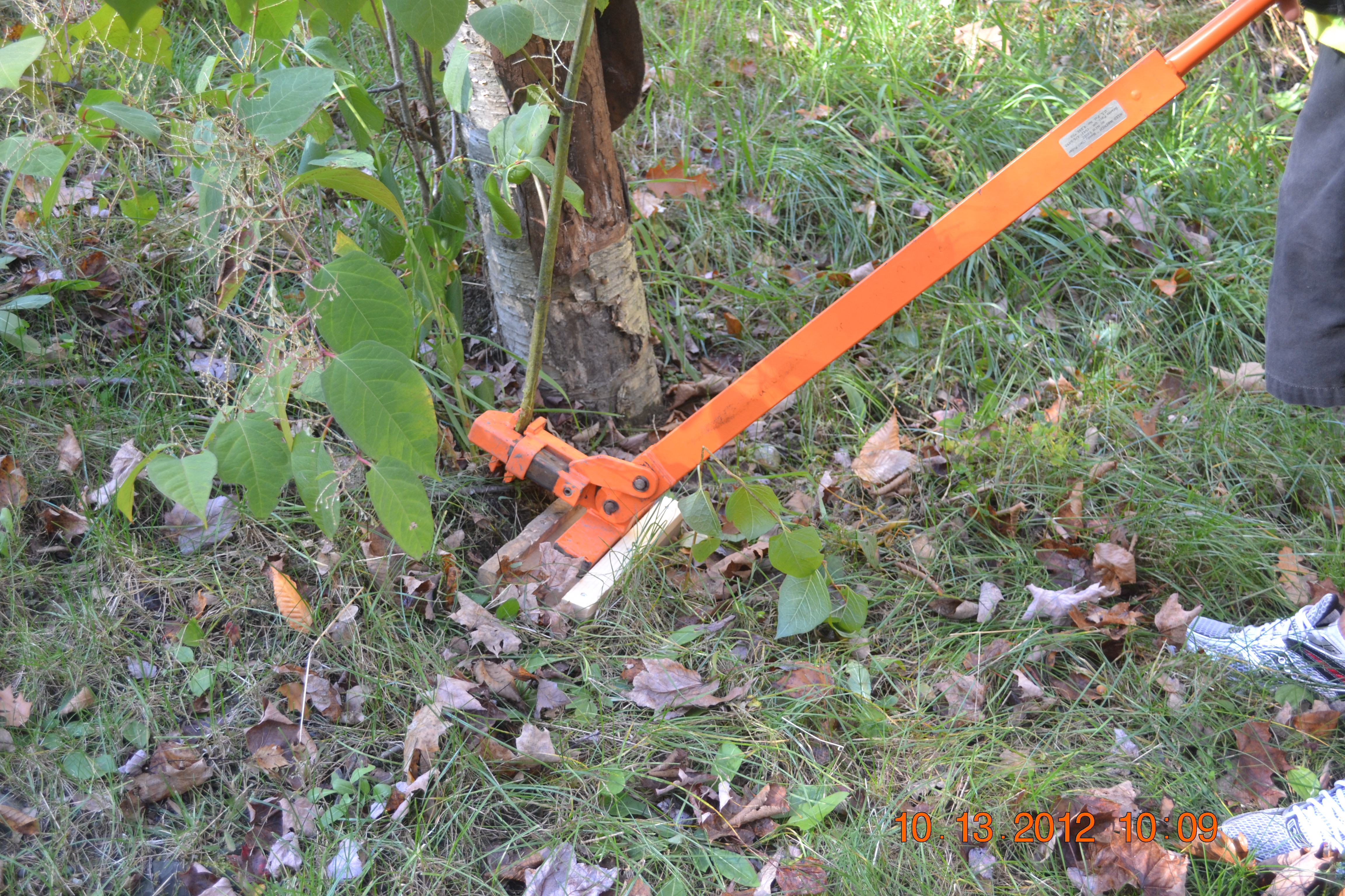 Picture of How to Use a Weed Wrench