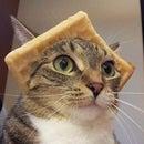 wafflecat_