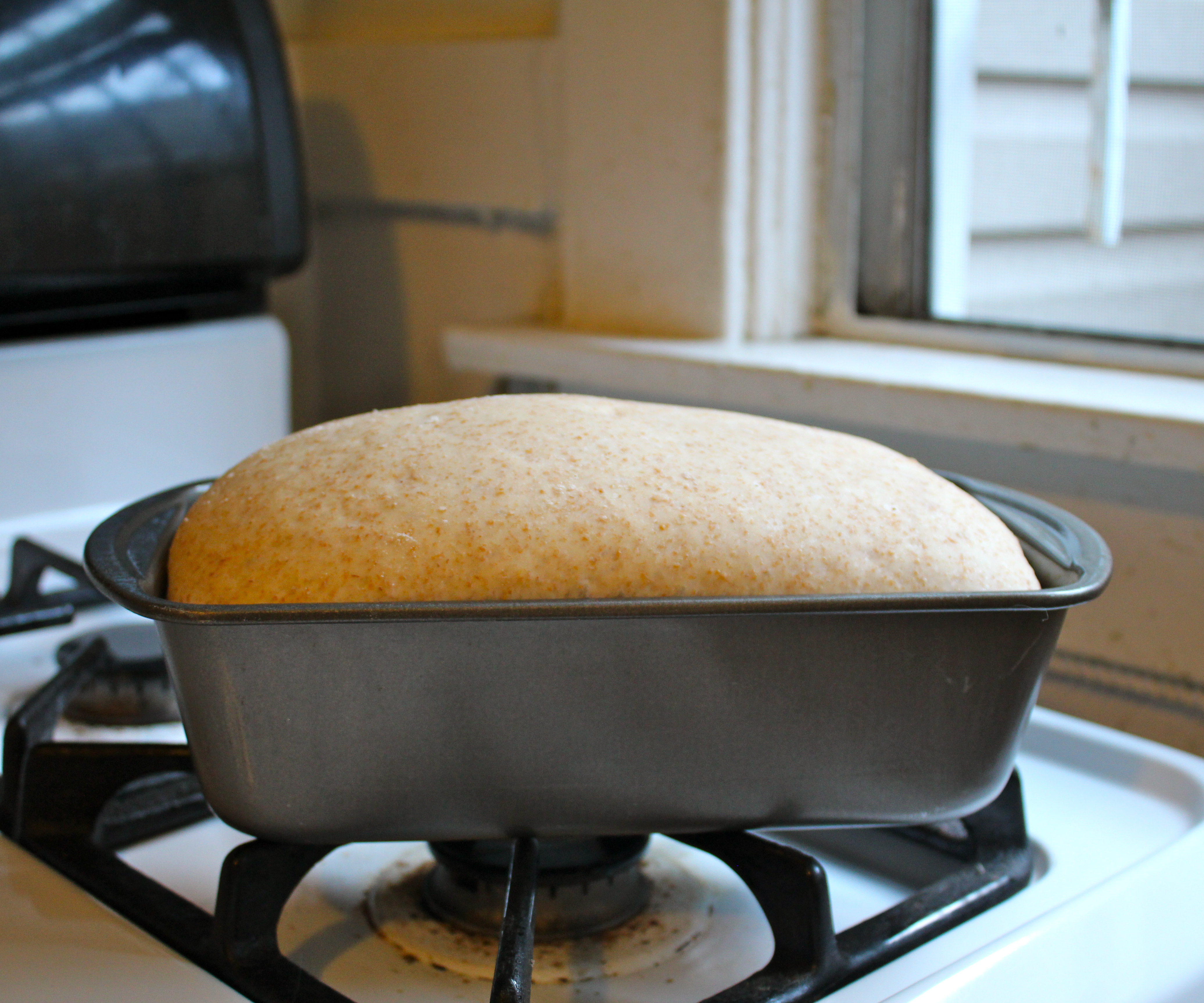 Picture of Second Rise + Preheating
