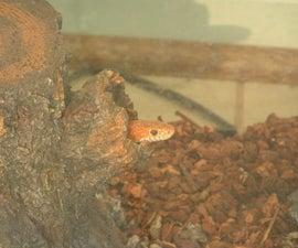 Snake Care (non-venomous)