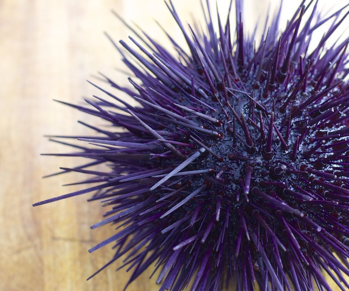 DIY Uni Sushi. Live Sea Urchin Dissection in Photos: 10 Steps (with ...