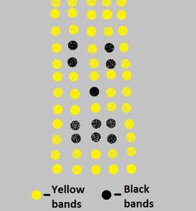 The Color Scheme!
