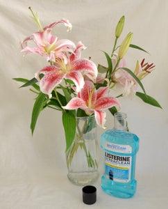 Keep Flowers Fresher and Help Houseplants
