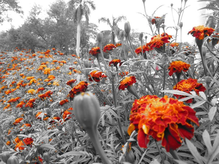 Picture of Flowers' Always Give Colors to This Black and White World