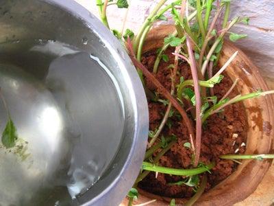 Plant the Stems
