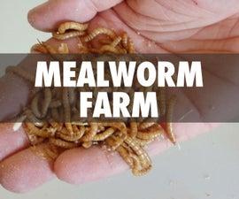 Mealworm Farm