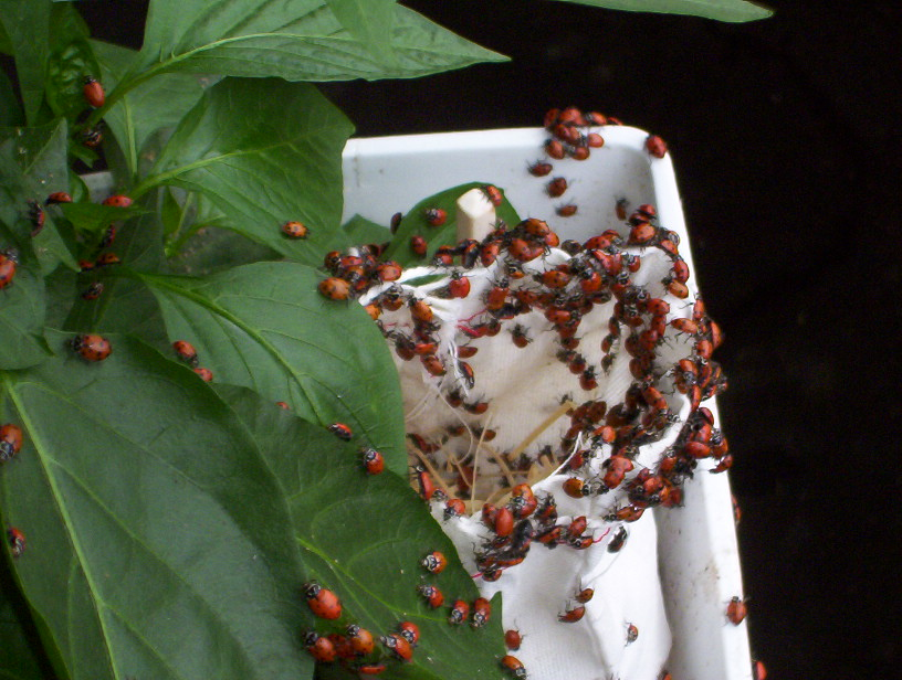 Picture of Ladybugs Go!