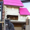 Pussy palace: extreme birdhouse conversion