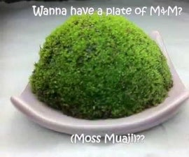 Fun with Moss (Embryophyte)
