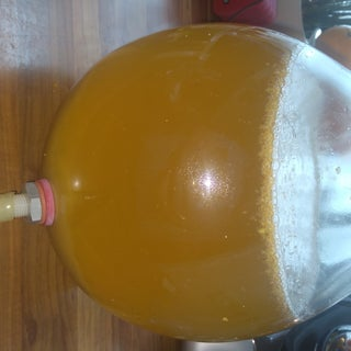 Ginger Cream Ale