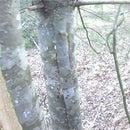 Hiding Spot IN a Tree