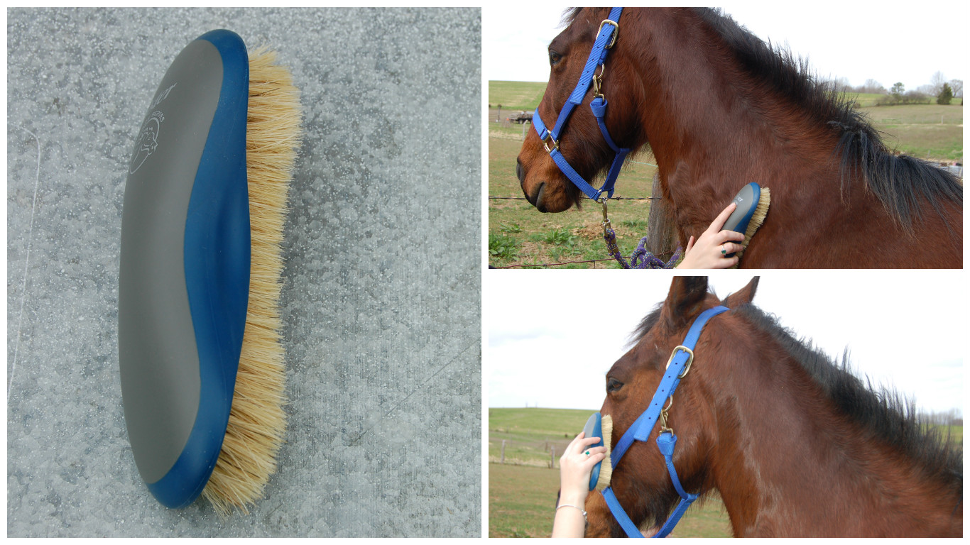 Picture of Use a Soft Brush to Remove Any Remaining Dust and to Groom Sensitive Areas