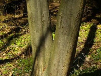 Download Tree Image
