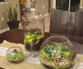 Beautiful Succulent Terrarium in Minutes.