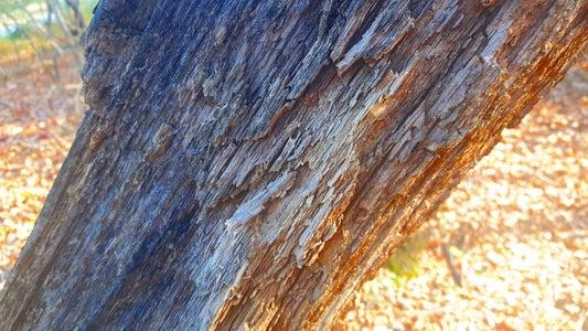 Punk Wood