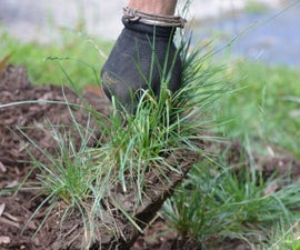Lawn care trick you need to know: Frig it, sprig it