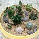 Tiny Desert Garden