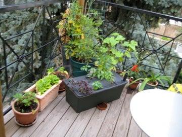 Planting an Earth Box