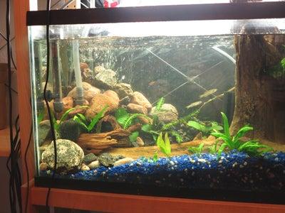 Add Fish After Nitrogen Cycle