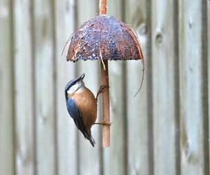 Coconut Bird Feeder.