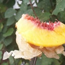 Campfire Peach Pies