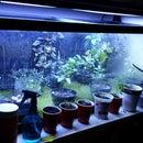 Unbelievably Simple Aquaponics