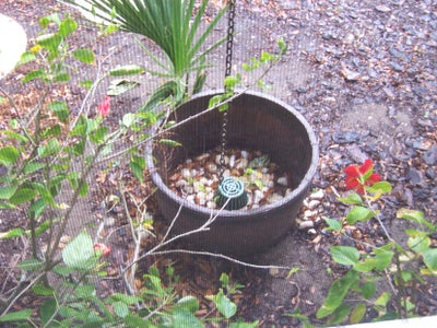 Rain Water Dumps Into Plant Bucket.