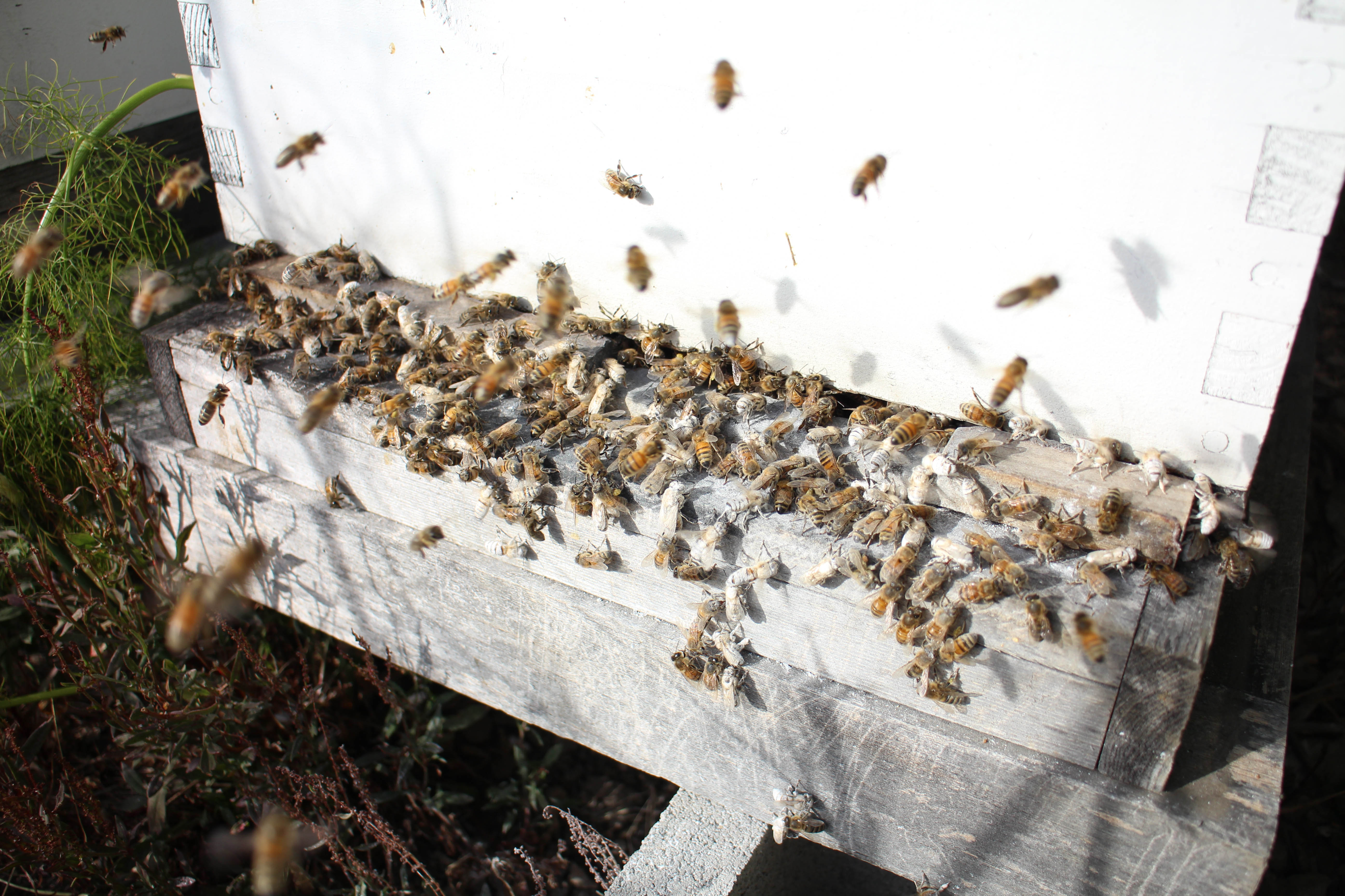 Picture of Release Your Bees