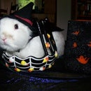 Draimans (my rabbit) warlock costume!
