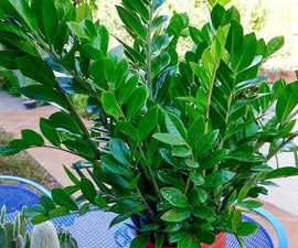 Houseplant Alert! 3 Reasons You Need the Awesome ZZ Plant