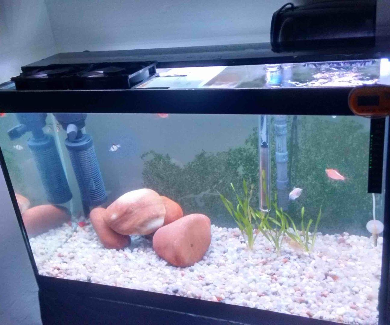 How to organize aquarium lighting correctly