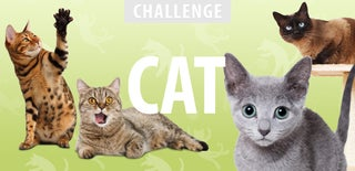 Cat Challenge 2016