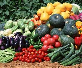 How to Grow Vegetable Plants!