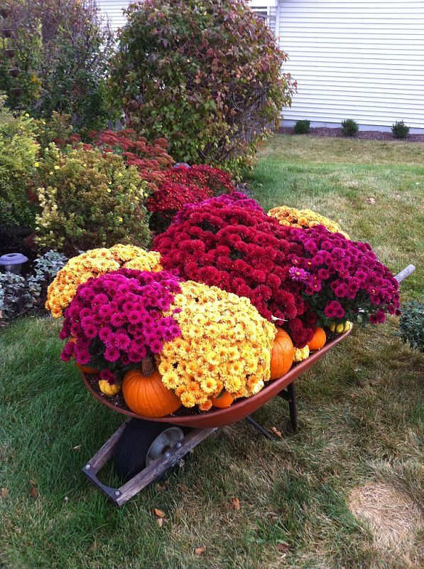 Picture of Wheel Barrow's Look Great With a Display