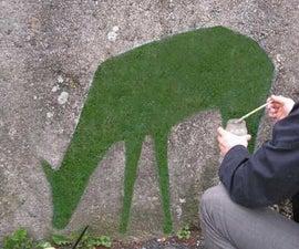 How to Make Moss Graffiti
