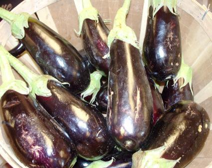 Picture of Eggplant,watering,feeding,planting,growing Climates,soil