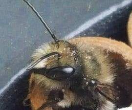 Mason Bee Hive