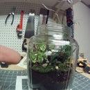 sealed terrarium