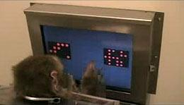 Picture of More Human vs. Monkey: Monkeys add up like we do