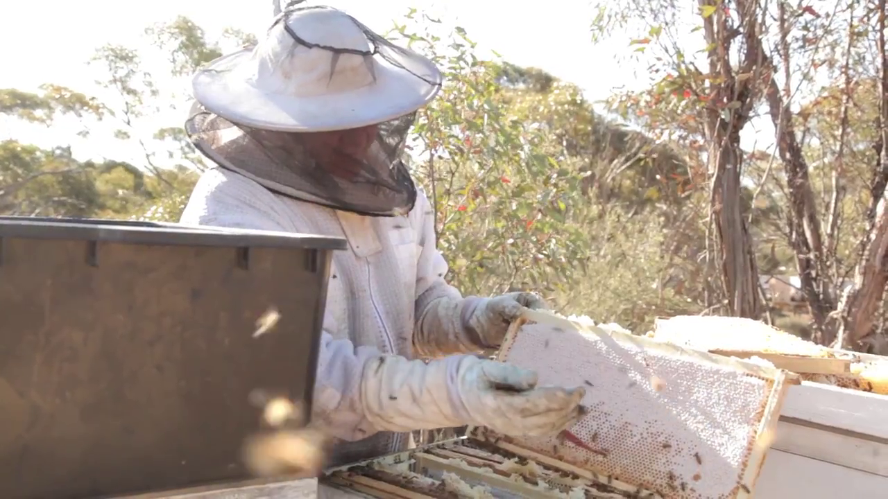 Picture of How to Collect Honey From Beehives